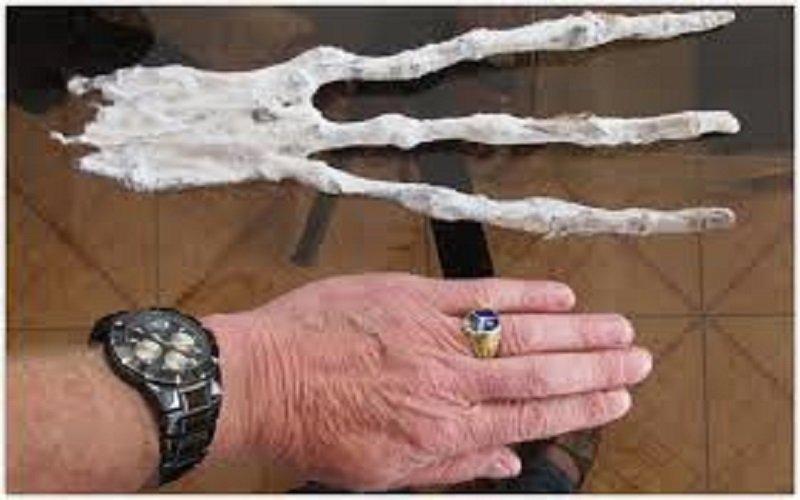 manos de Momias extraterrestres de Nazca