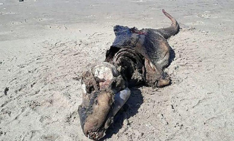 Apareció un MONSTRUO en una playa Británica