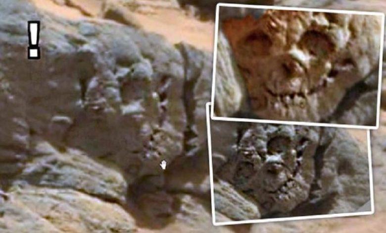 Cráneo fosilizado encontrado en el Planeta Rojo