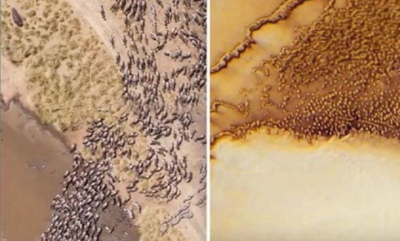 Enorme manada de animales alienígenas encontrados en imágenes de Marte