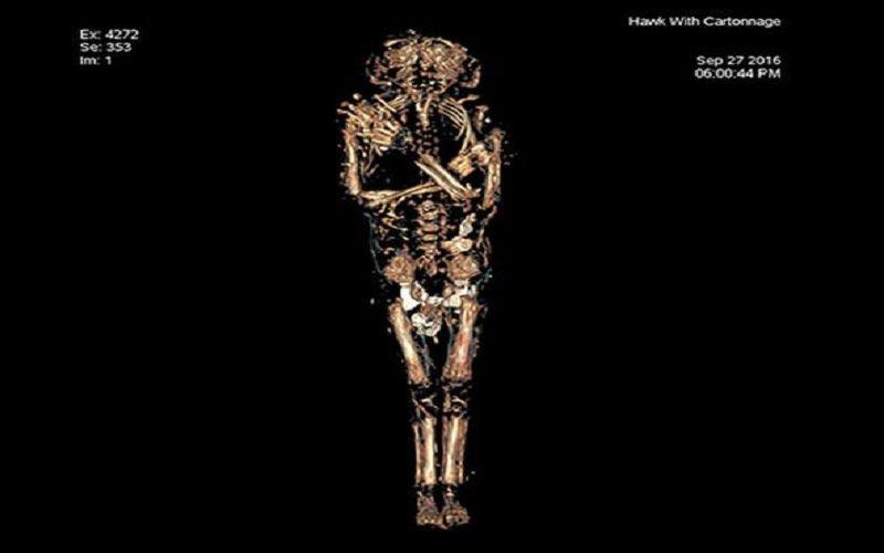 Egyptian-mummy-ancient-remains-Maidstone-University-hawk-mummified-baby