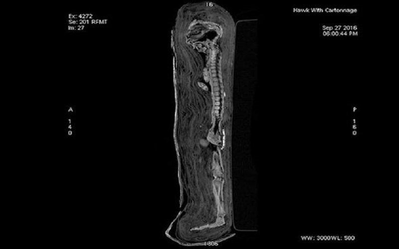 egipto Revelan una momificación muy extraña