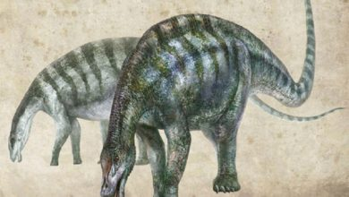 Photo of Encontraron en China un dinosaurio gigante que podría cambiar la historia de la evolución