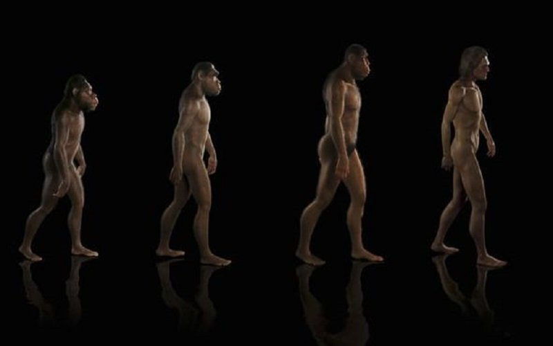 nuevo ancestro humano