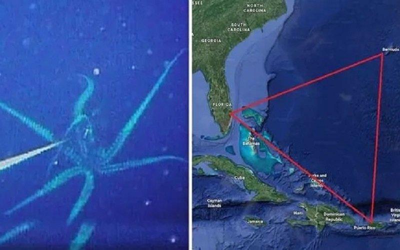 Photo of Triángulo de las Bermudas: ¿Por qué el sorprendente descubrimiento de una criatura de 10 metros podría explicar la pérdida de naves?