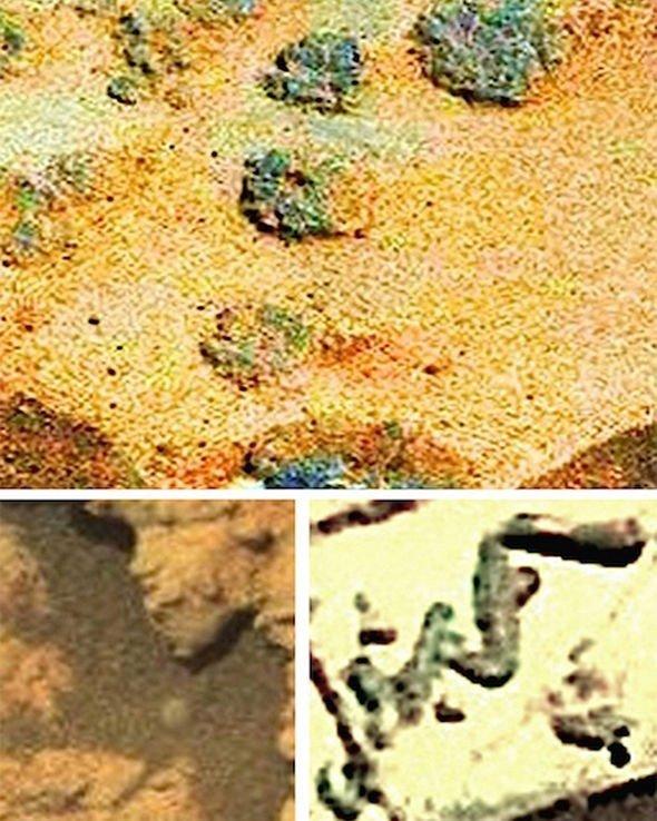 ¿Vida en Marte? ¿Encontraron fósiles de gusanos en el Planeta Rojo? 1