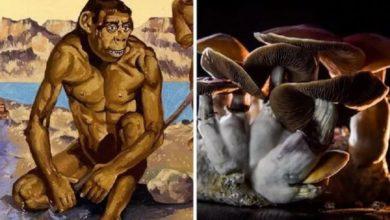 Photo of Avance científico: Los antiguos humanos usaban hongos psicodélicos que les ayudaron a evolucionar
