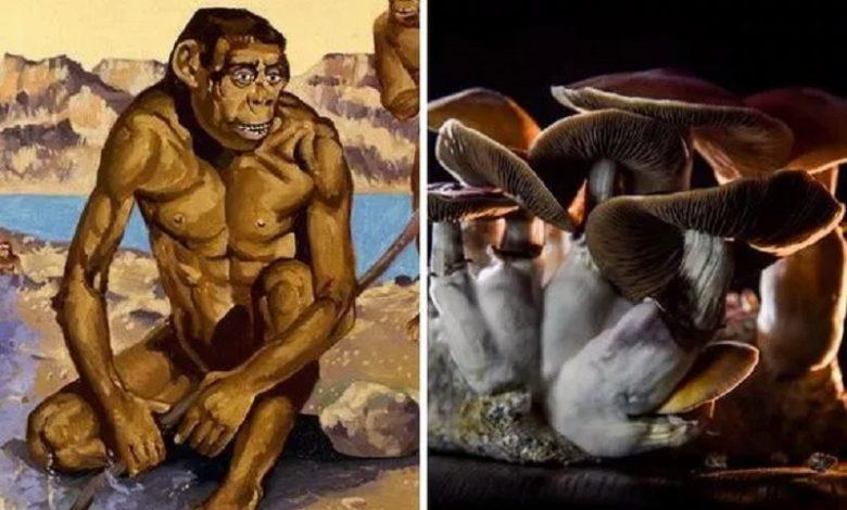 Los antiguos humanos usaban hongos psicodélicos que les ayudaron a evolucionar