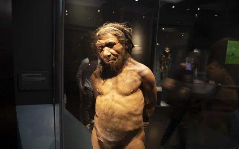 evolución del homo erectus