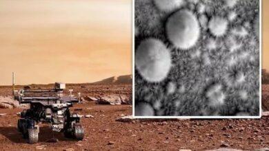 Photo of ¡Hay vida en Marte! dicen desde la NASA